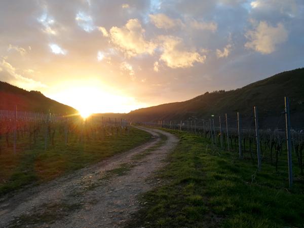 Sonnenuntergang Weinberg