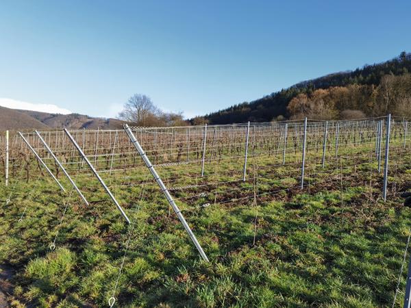 Endpfahl Weinbau